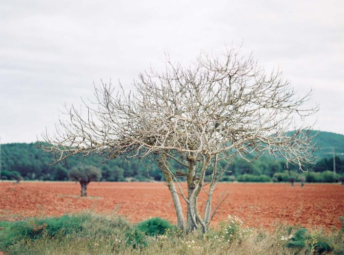 Film photography in Ibiza. Beautiful spring time in Balearic Islands