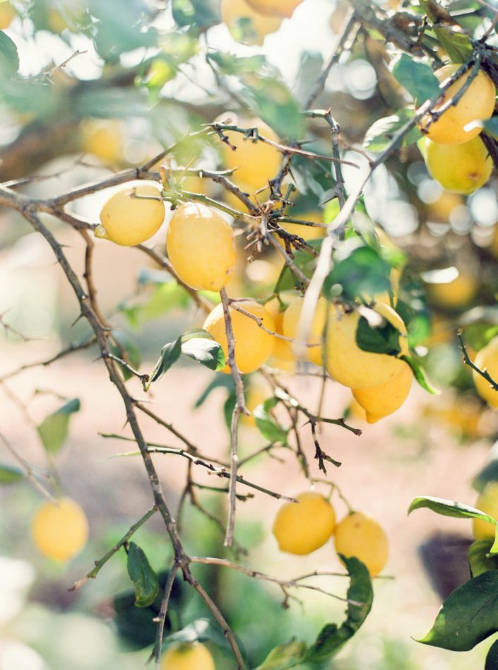 Nature in Ibiza. Lemons. Film Photography